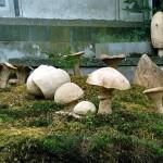 11-Pilze