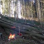 2-Holzschlag